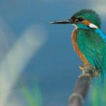 birding en euskadi